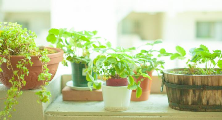 育ててみよう!初心者向けの観葉植物