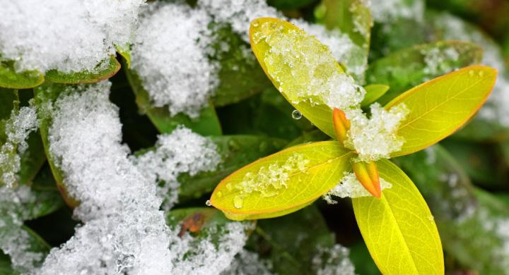 寒い冬でも庭で育てられる花5選