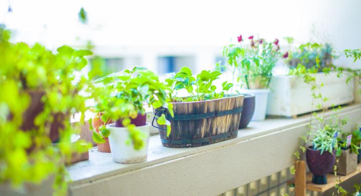 寒い冬でも育つ観葉植物