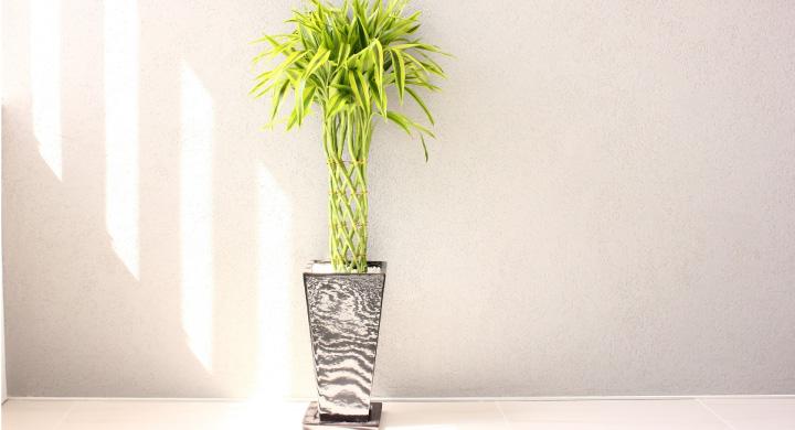 リビングやオフィスに!大型観葉植物