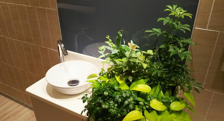 清潔感のあるトイレに!おすすめ観葉植物5選