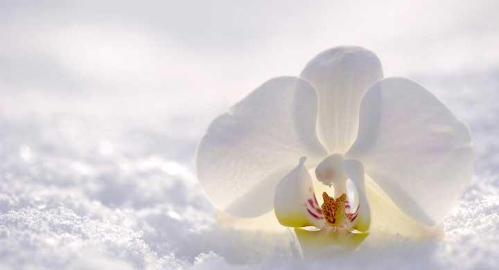 冬の花、ガーデニング初心者にもオススメの草花10選