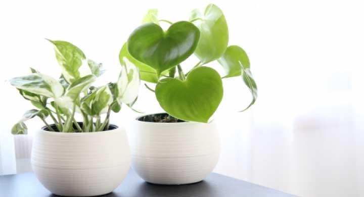 初心者でも育てやすい小さい観葉植物10選