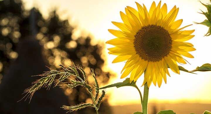 夏の花、初めてのガーデニングでも育てやすい草花10選