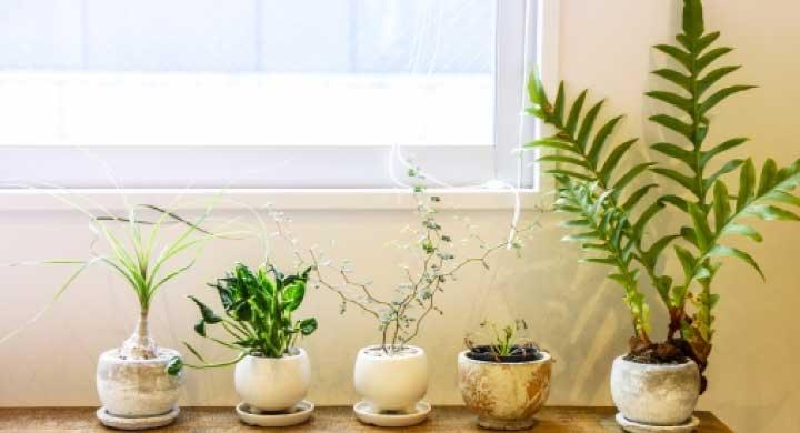 観葉植物はどこで買うのがいいの?