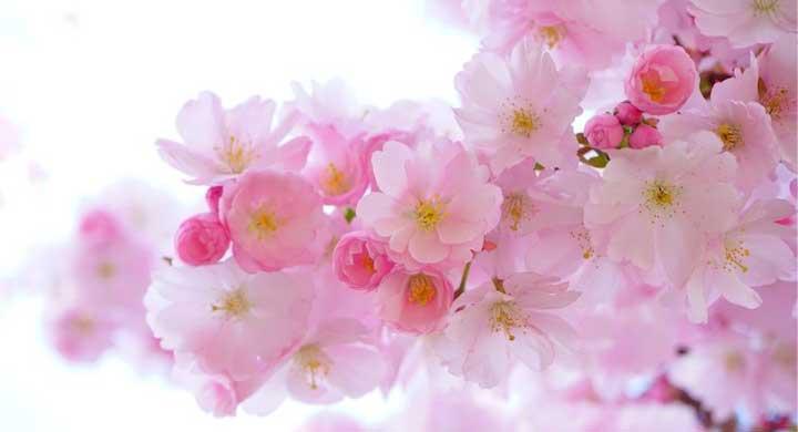 春の花、初めてのガーデニングでも育てやすい草花10選