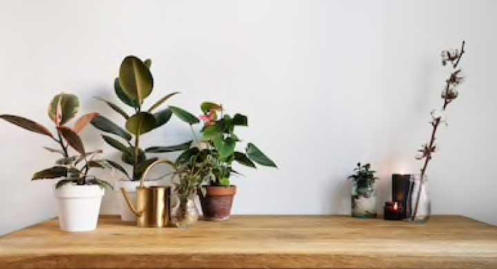 心理的に良い効果をもたらす観葉植物をプレゼントに!