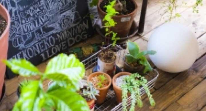 観葉植物を小さいまま育てる方法
