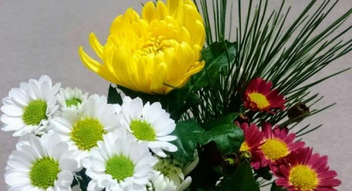 夏に花が咲く『夏菊の育て方』